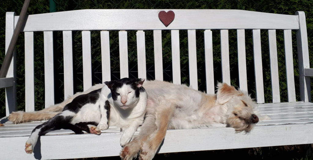 Foto: Katze und Hund ruhen sich auf einer Bank aus
